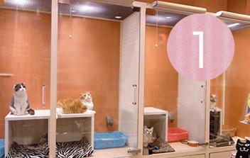 猫のことだけを考えた「ねこ専用ホテル」