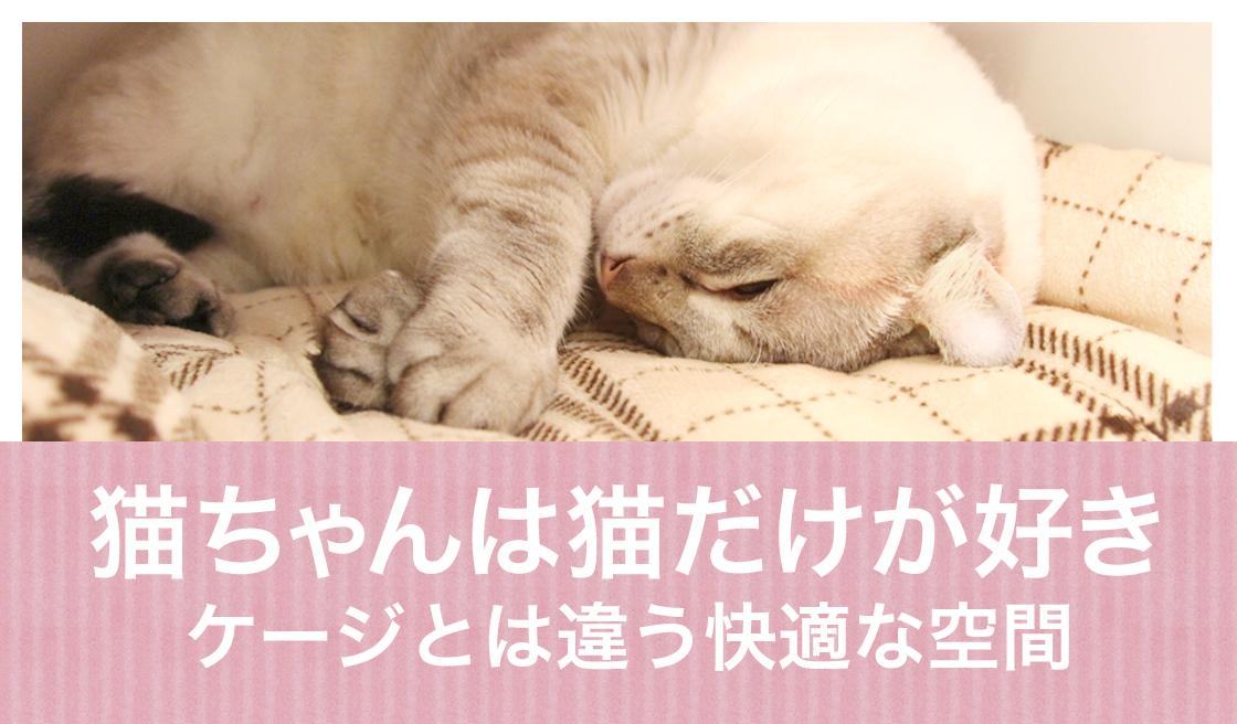猫ちゃんは猫だけが好き ケージとは違う快適な空間