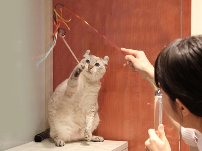 遊び好きの猫ちゃん