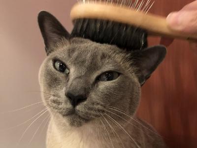 ブラッシング好きの猫ちゃん