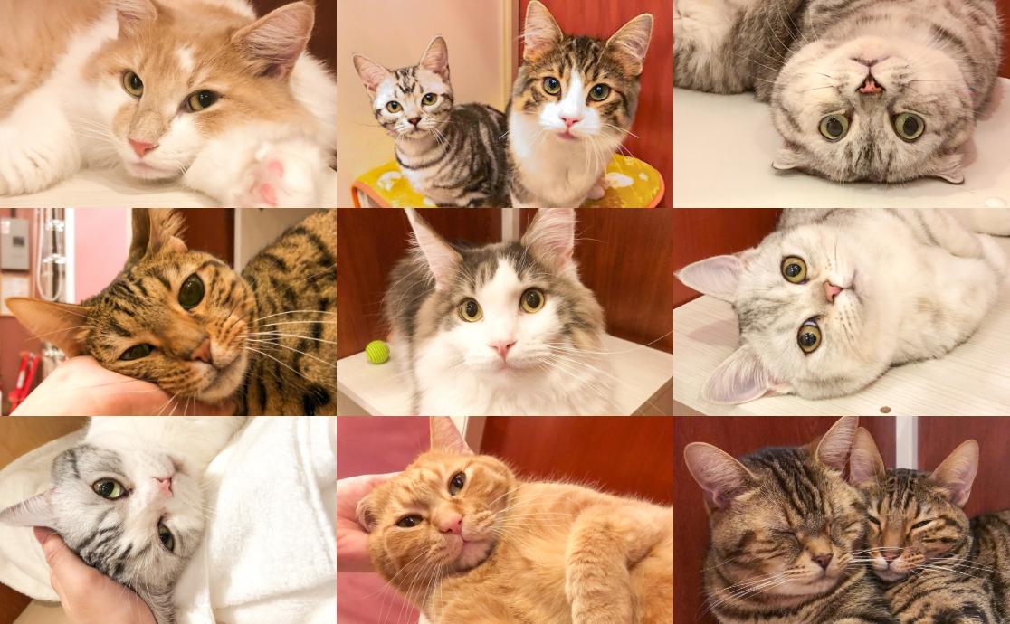 ねこままホテルでお世話した猫ちゃんたち